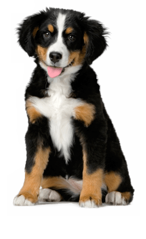 Free Quiz What Dog Is Right For Me