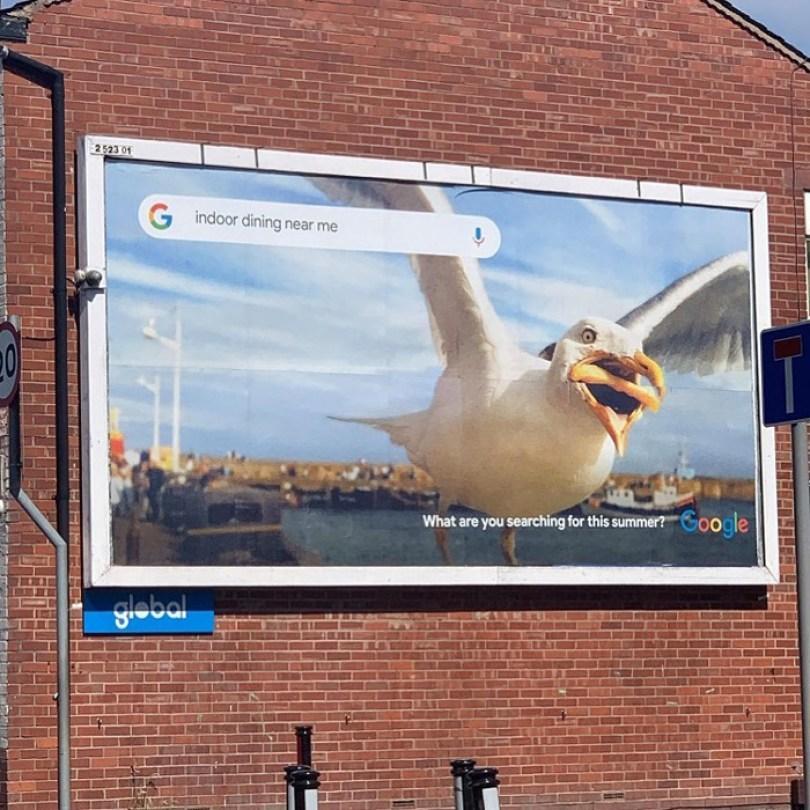 google buys seagull photo hannah huxford 4 - Já pensou ter uma foto sua comprada pelo Google? Ela conseguiu!