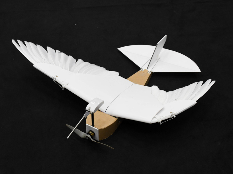 a robot bird built using 40 pigeon feathers flies like the real thing