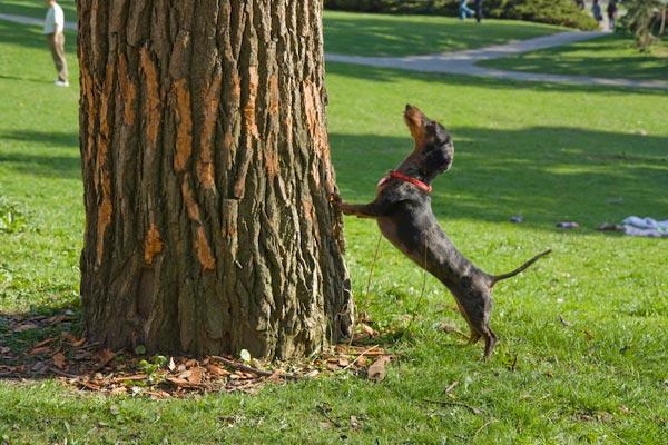 Image result for dog barking tree