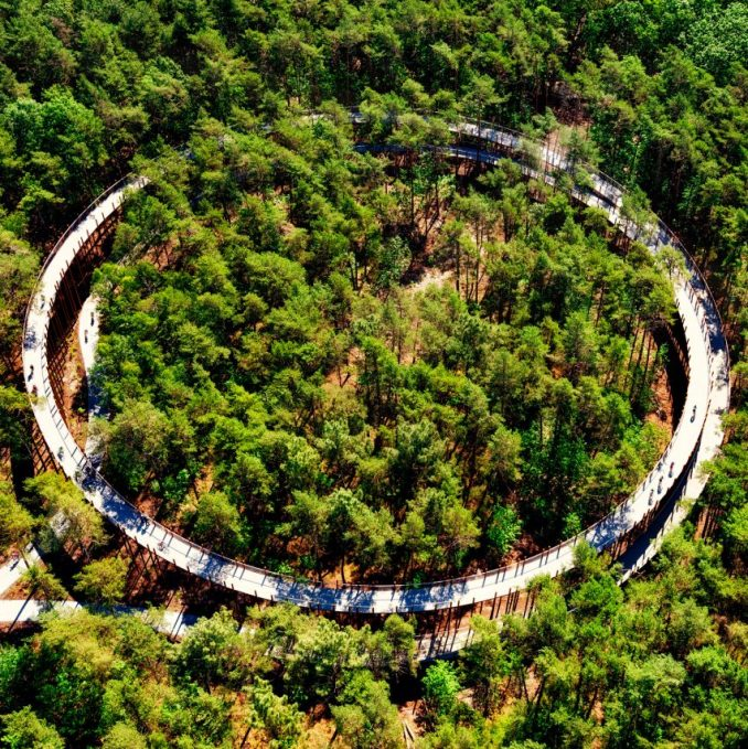 Cycling Through The Trees in Limburg by BuroLandschapandDe Gregorio & Partners