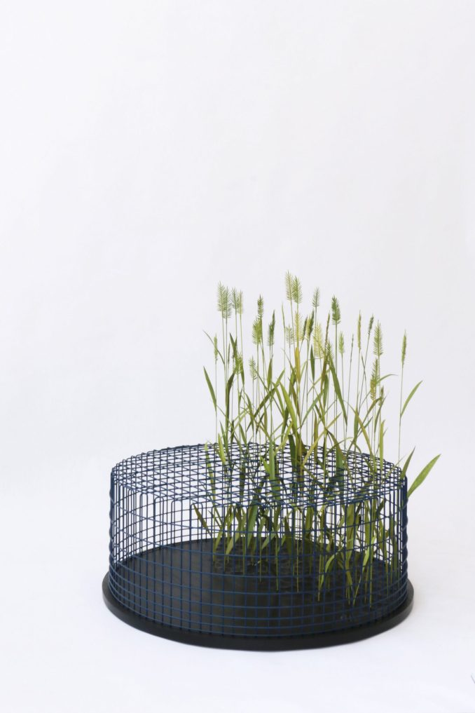 Limited Grasses by mischer'traxler studio from Split Personality exhibition at Friedman Benda