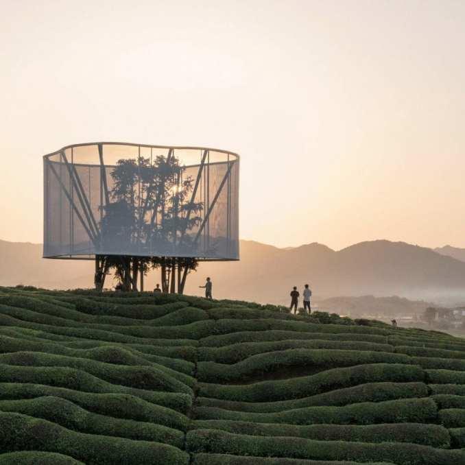 Light installation in Chinese tea field