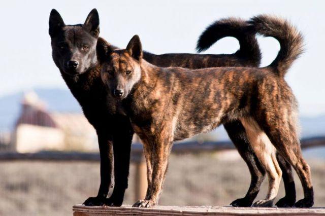 Метисы фото собаки