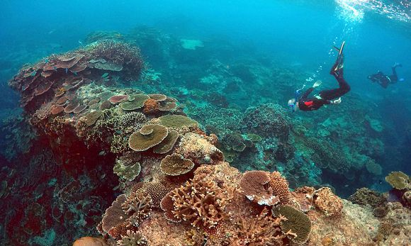 Forscher inspizieren den Zustand des Riffs. / Bild: REUTERS