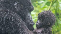 Невероятни снимки на дивата природа