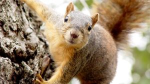 Aggressive squirrels attack New Yorkers (video)