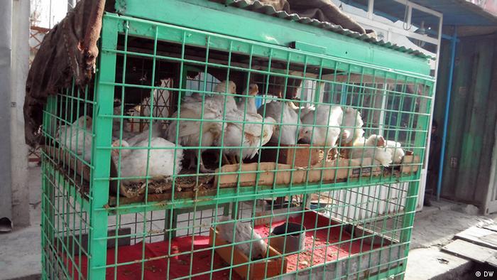 Chicken market in Kabul (DW)
