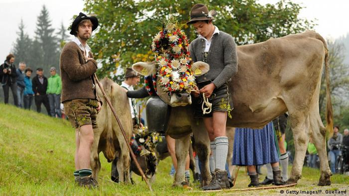 Баварские пастухи во время праздника по случаю возвращения стада с летних горных пастбищ