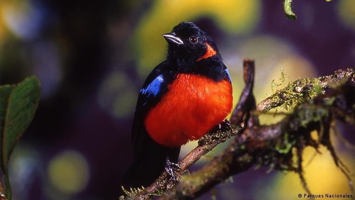 Solo en un 10 por ciento del territorio se concentra el 70 por ciento de la biodiversidad de Colombia.