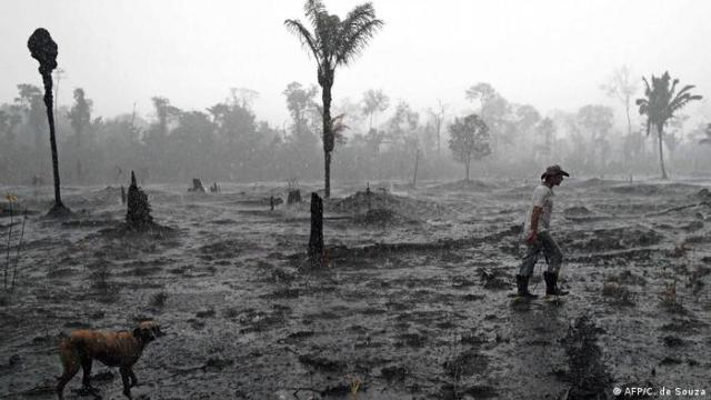 Burnt area of the Amazon Rainforest in Brazil