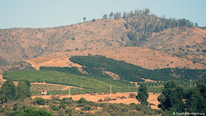 Cerros secos y plantaciones de aguacate verde en Chile
