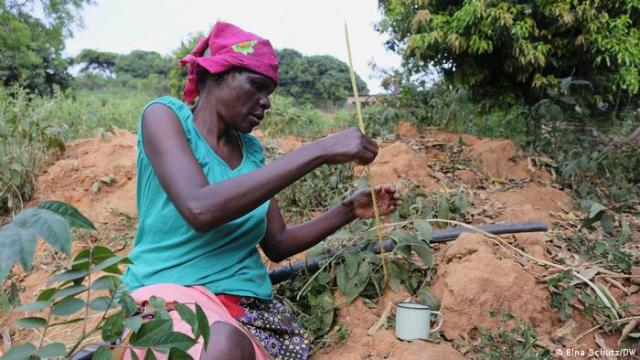 A woman catches termites by sticking a sliver of a leaf into the mound and pulling them out quickly