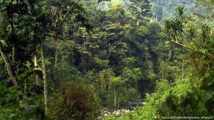 Tropical rainforest in Uganda