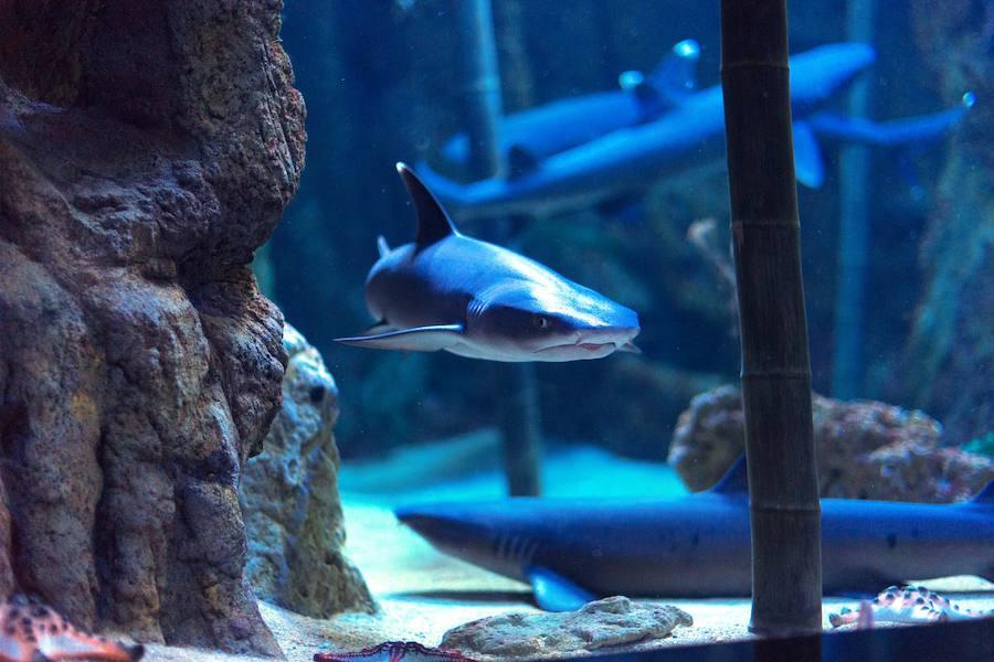 365 días de acuario. El pase anual del Acuario de Gijón a mitad de ...