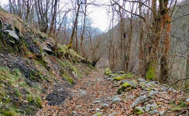 Ruta PR-AS 126 del Valle del Río Medio