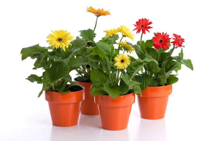 Plants for Air Quilty in Your Apartment