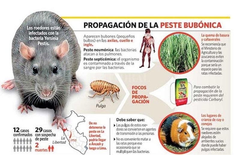 Brote de peste bubónica: ¿qué es