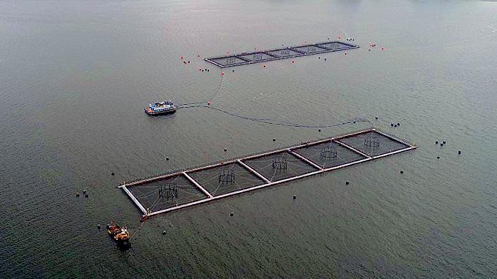 """Sernapesca informa que 23 mil salmones escaparon desde un cultivo en Quemchi por la """"rotura superficial de una red"""""""