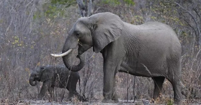 Selfie opportunity gets deadly as elephant tramples man in Zimbabwe |  Africanews