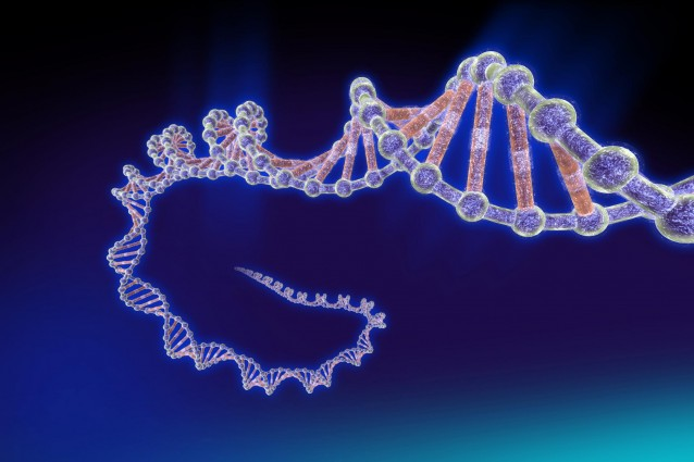 Scoperto un DNA quadruplo nelle cellule tumorali.