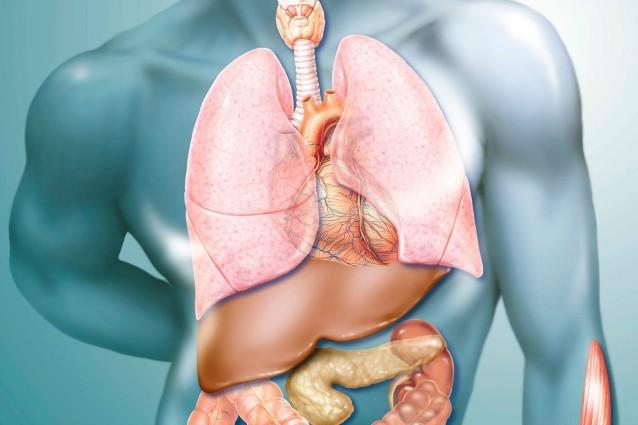 Creato il primo fegato umano dalle staminali pluripotenti indotte.