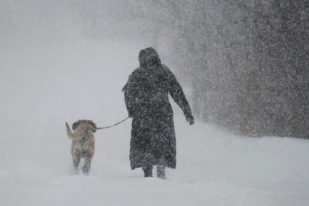 Da lupo a cane: la storia della nascita della più grande amicizia.