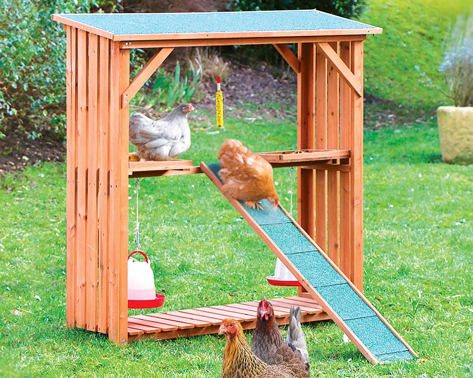 le stand poules with poulailler pour 10 poules
