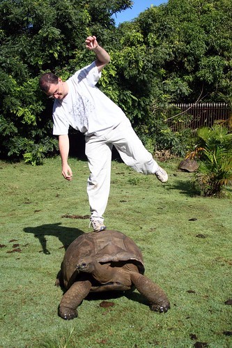 Tortoise a l'equilibre