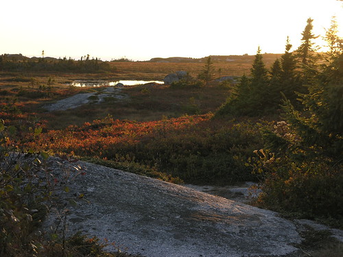 Evening on the barrens