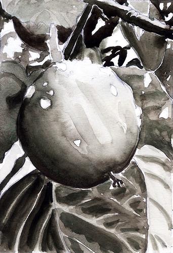 Persimon-value sketch