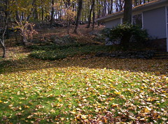 November 5 - Leaves 016