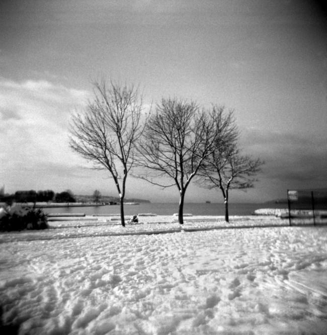 Three bare trees