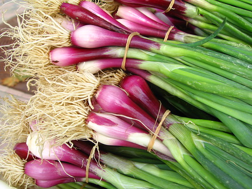 farmer's market: beautiful green onions
