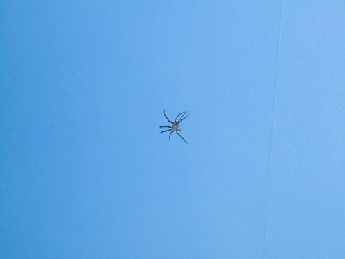 Huge Spider 3 (by Godlesswanderer)
