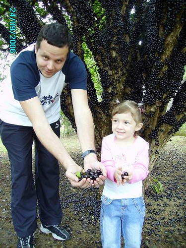 Picking jabuticaba