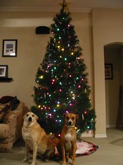 Colby and Bosley Under the Tree
