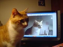14.電腦裡的朋友 你也在跟我看一樣的東西嘛?