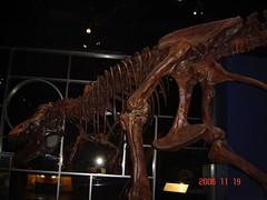 T-Rex @ museum in Drumheller, AB