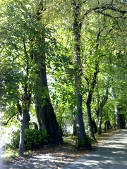 balade bord du lac oct 06 (2)