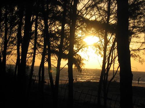 Tarkarli - sunrays filtering through the trees