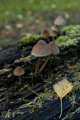 Toadstools, leaf, moss