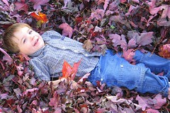 laying in the leaves...