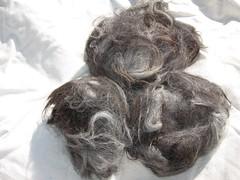 raw llama fiber