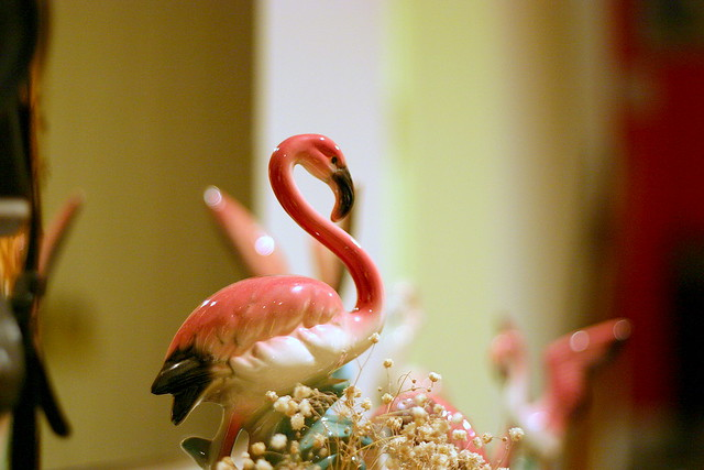 my cousin's pink flamingo collection