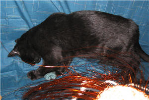 Chatton noir mettant la patte sur un échantillon tricoté - Black kitten putting his paw on a knitting sample.