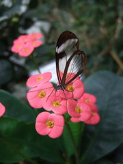 glasswing06