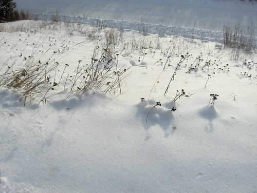 Grass in the Glistening Snow
