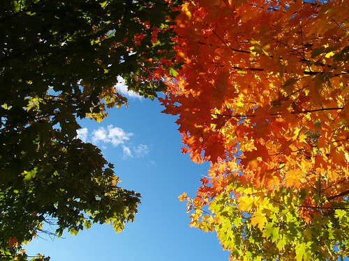 Rainbow Maples in Leelanau County