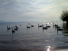 balade bord du lac oct 06 (17)